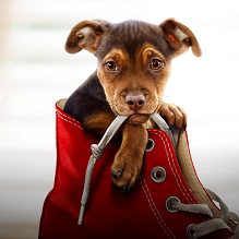 10 Cutest Canines from Your Favorite Dog Movies